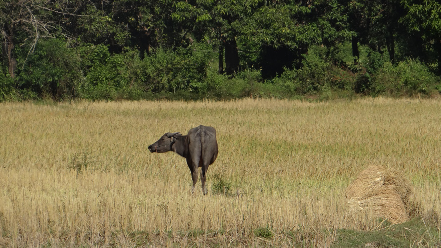 Loved this photo of the water buffalo. There was something so serene that almost makes me wish for a simpler life.