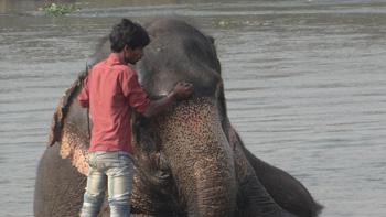 Chitwan National Park, Nepal Ken Curtis blog